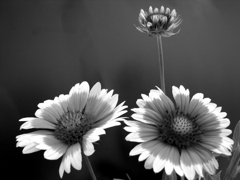 Examples Of Black And White Photography