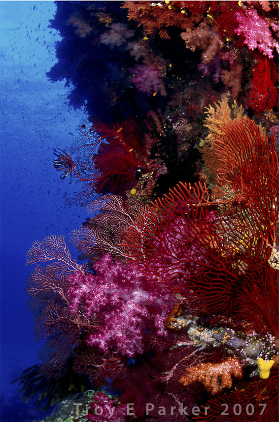 examples of coral