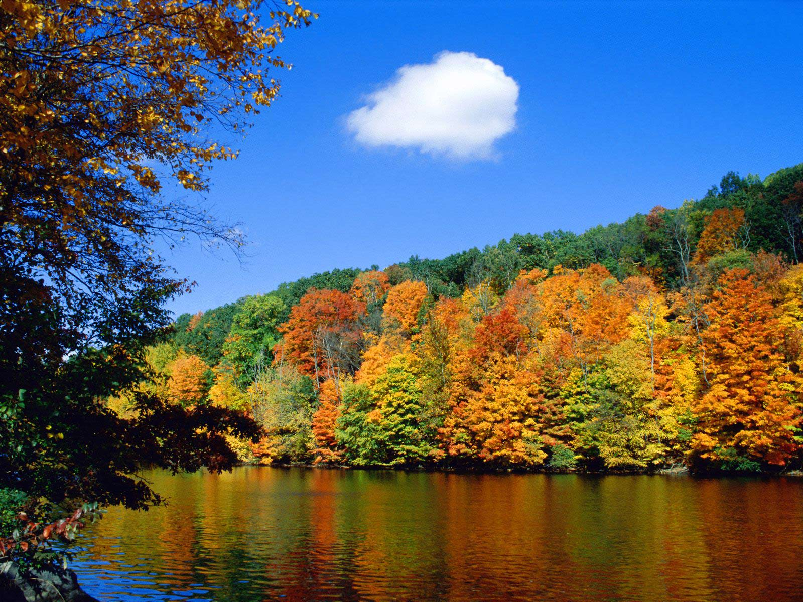 Beautiful Fall Nature